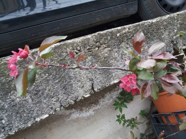 E' primavera e seppure piove sempre ci sono i primi fiori ed i primi colori 20190313