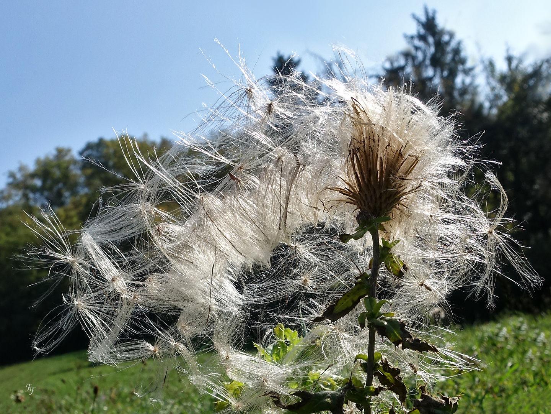 Les cheveux au vent A2018_34