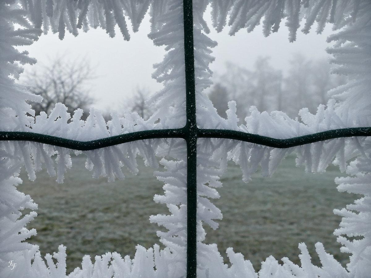 Le nez collé à la fenêtre A2019_74