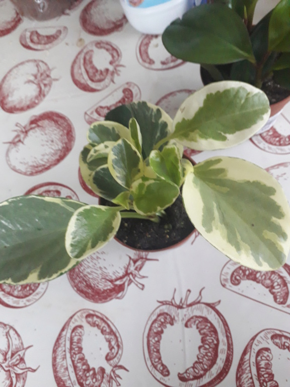 Identification plante  20190220