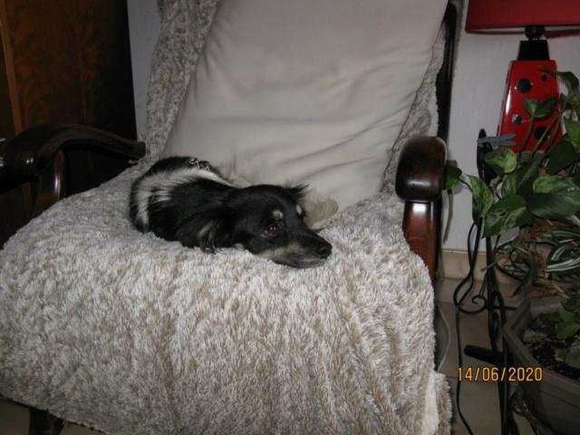 POPPY (ex RONNA) - femelle, de petite taille - née environ mai 2018 - REMEMBER ME LAND - Adoptée par Hélène (01)  - Page 2 1412
