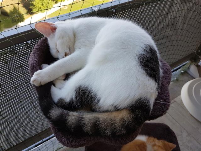 Mr SPOCK - chaton mâle, aveugle, né environ en mars 2017 - chez Lucian - Réservé FA par Abysse - Adopté par Valérie (92) - Page 2 20170911
