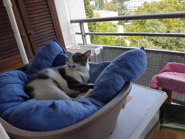 VOYOU, chaton mâle, né en Août/septembre 2016 (Pascani) - en FA chez Abysse (dpt92) - ADOPTE PAR VALERIE (92) 20180716