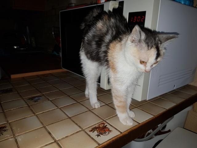 MAELYA - chaton femelle, née environ septembre 2018 - Adoptée par Véronique (78) 20190212