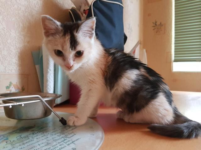 MAELYA - chaton femelle, née environ septembre 2018 - Adoptée par Véronique (78) 20190214