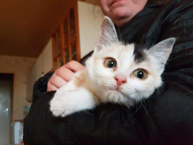 MAELYA - chaton femelle, née environ septembre 2018 - Adoptée par Véronique (78) 20190215