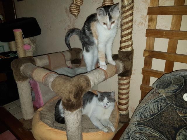 MAELYA - chaton femelle, née environ septembre 2018 - Adoptée par Véronique (78) 20190264