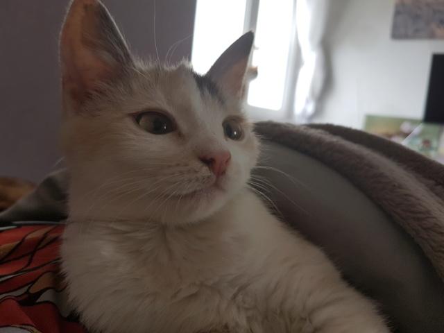 MAELYA - chaton femelle, née environ septembre 2018 - Adoptée par Véronique (78) 20190311