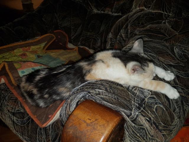 MAELYA - chaton femelle, née environ septembre 2018 - Adoptée par Véronique (78) 20190314