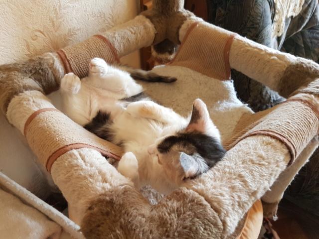 MAELYA - chaton femelle, née environ septembre 2018 - Adoptée par Véronique (78) 20190318