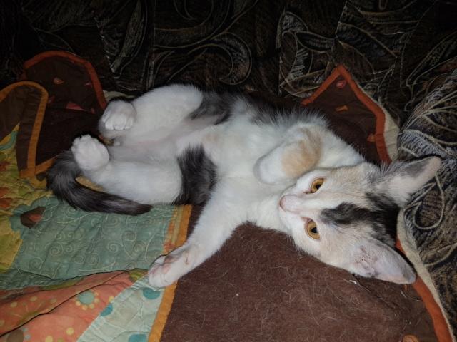 MAELYA - chaton femelle, née environ septembre 2018 - Adoptée par Véronique (78) 20190319