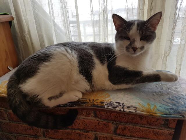 VOYOU, chaton mâle, né en Août/septembre 2016 (Pascani) - en FA chez Abysse (dpt92) - ADOPTE PAR VALERIE (92) - Page 2 20190327