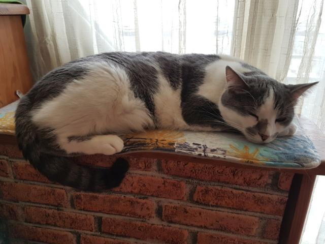 VOYOU, chaton mâle, né en Août/septembre 2016 (Pascani) - en FA chez Abysse (dpt92) - ADOPTE PAR VALERIE (92) - Page 2 20190328