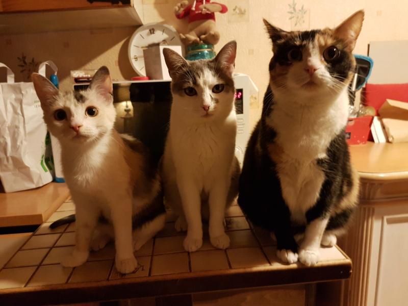 MAELYA - chaton femelle, née environ septembre 2018 - Adoptée par Véronique (78) 20190415