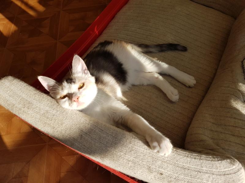 MAELYA - chaton femelle, née environ septembre 2018 - Adoptée par Véronique (78) 20190416