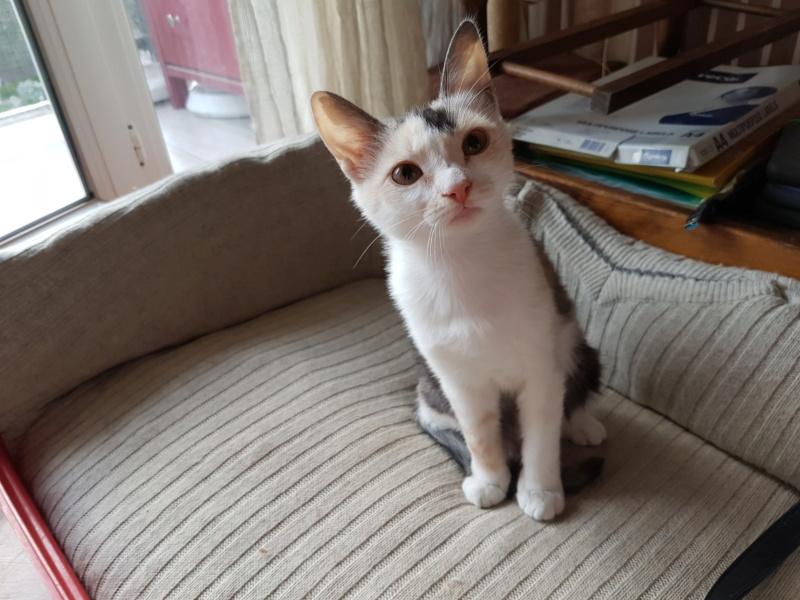 MAELYA - chaton femelle, née environ septembre 2018 - Adoptée par Véronique (78) 20190417