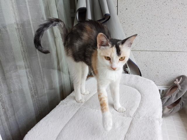 MAELYA - chaton femelle, née environ septembre 2018 - Adoptée par Véronique (78) 20190512