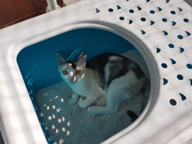 MAELYA - chaton femelle, née environ septembre 2018 - Adoptée par Véronique (78) 20190615