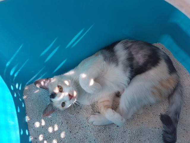 MAELYA - chaton femelle, née environ septembre 2018 - Adoptée par Véronique (78) 20190617