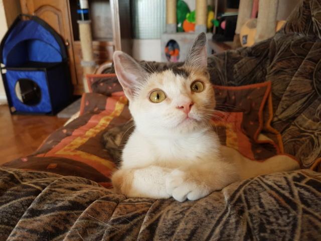 MAELYA - chaton femelle, née environ septembre 2018 - Adoptée par Véronique (78) 20190618