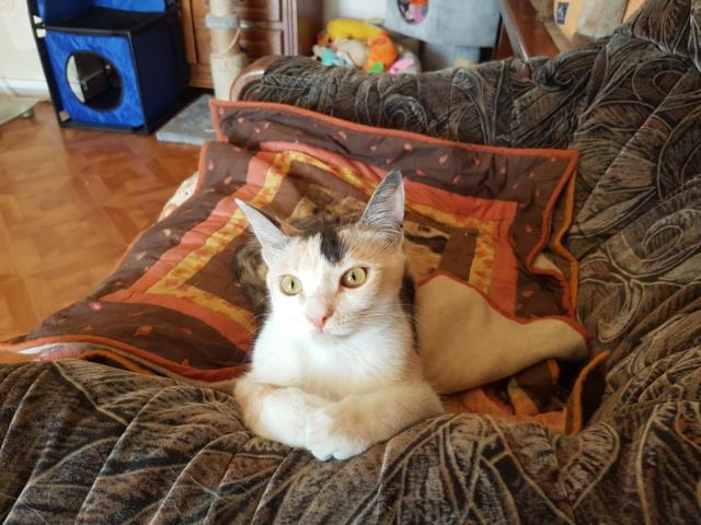 MAELYA - chaton femelle, née environ septembre 2018 - Adoptée par Véronique (78) 20190620