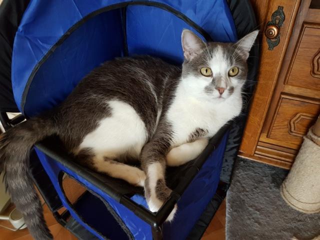 VOYOU, chaton mâle, né en Août/septembre 2016 (Pascani) - en FA chez Abysse (dpt92) - ADOPTE PAR VALERIE (92) - Page 2 20190625