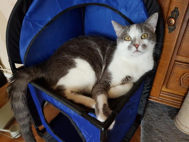VOYOU, chaton mâle, né en Août/septembre 2016 (Pascani) - en FA chez Abysse (dpt92) - ADOPTE PAR VALERIE (92) - Page 2 20190626