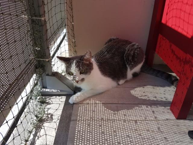 VOYOU, chaton mâle, né en Août/septembre 2016 (Pascani) - en FA chez Abysse (dpt92) - ADOPTE PAR VALERIE (92) - Page 2 20190627