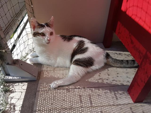 VODKA (ex KIARA) - chat femelle handicapée, née environ en 2015 - chez Lucian - Réservée FA par Abysse - ADOPTEE PAR VALERIE (92) - Page 2 20190630