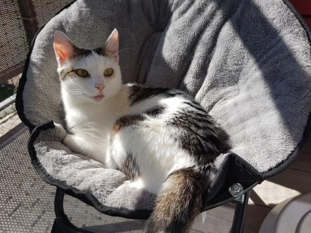 VODKA (ex KIARA) - chat femelle handicapée, née environ en 2015 - chez Lucian - Réservée FA par Abysse - ADOPTEE PAR VALERIE (92) - Page 2 20190631