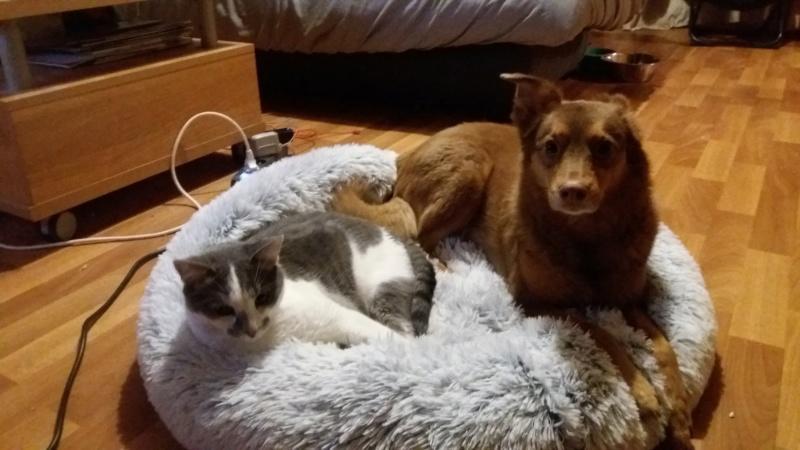 VOYOU, chaton mâle, né en Août/septembre 2016 (Pascani) - en FA chez Abysse (dpt92) - ADOPTE PAR VALERIE (92) - Page 2 20200278