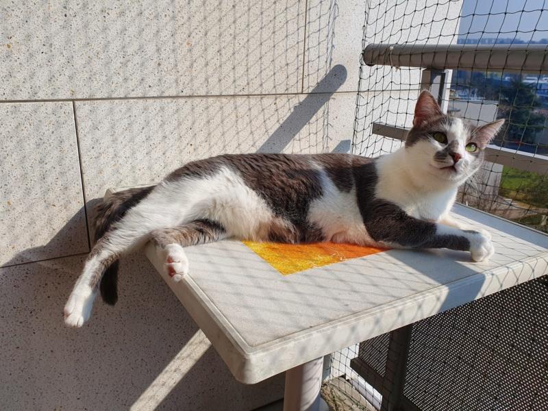 VOYOU, chaton mâle, né en Août/septembre 2016 (Pascani) - en FA chez Abysse (dpt92) - ADOPTE PAR VALERIE (92) - Page 2 20200311