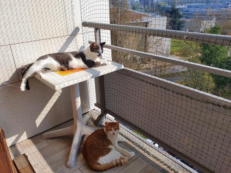 VOYOU, chaton mâle, né en Août/septembre 2016 (Pascani) - en FA chez Abysse (dpt92) - ADOPTE PAR VALERIE (92) - Page 2 20200312