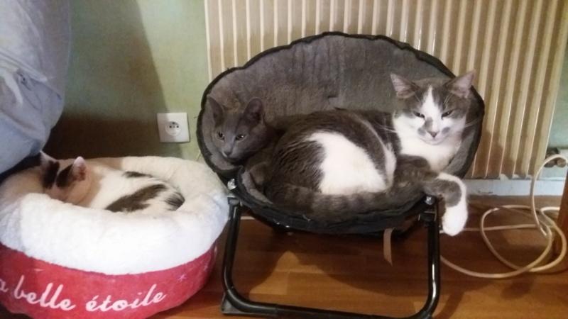 VOYOU, chaton mâle, né en Août/septembre 2016 (Pascani) - en FA chez Abysse (dpt92) - ADOPTE PAR VALERIE (92) - Page 2 20200327