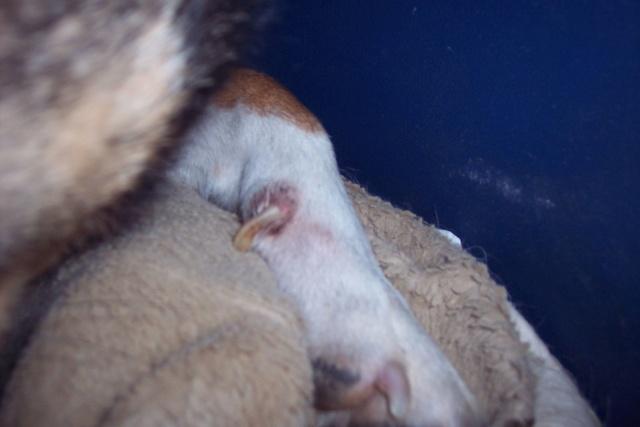 KYOO - 4 ANS DE BOX - mâle croisé de taille moyenne, né environ mai 2009 - REMEMBER ME LAND  , Adopté par Isabelle (Belgique) - Page 18 314