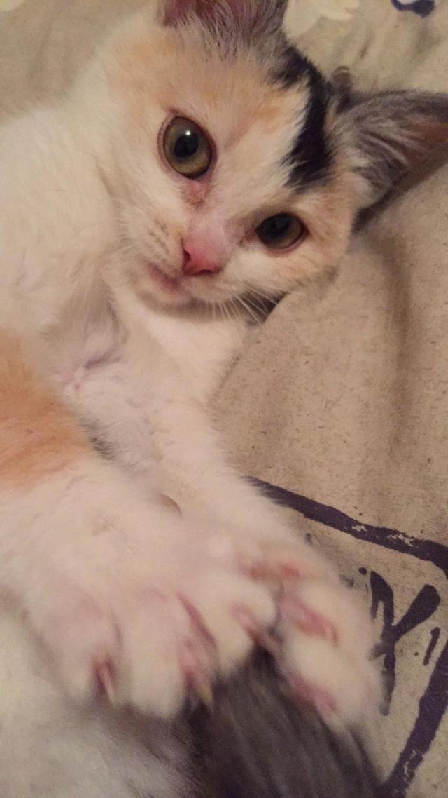 MAELYA - chaton femelle, née environ septembre 2018 - Adoptée par Véronique (78) 51112811