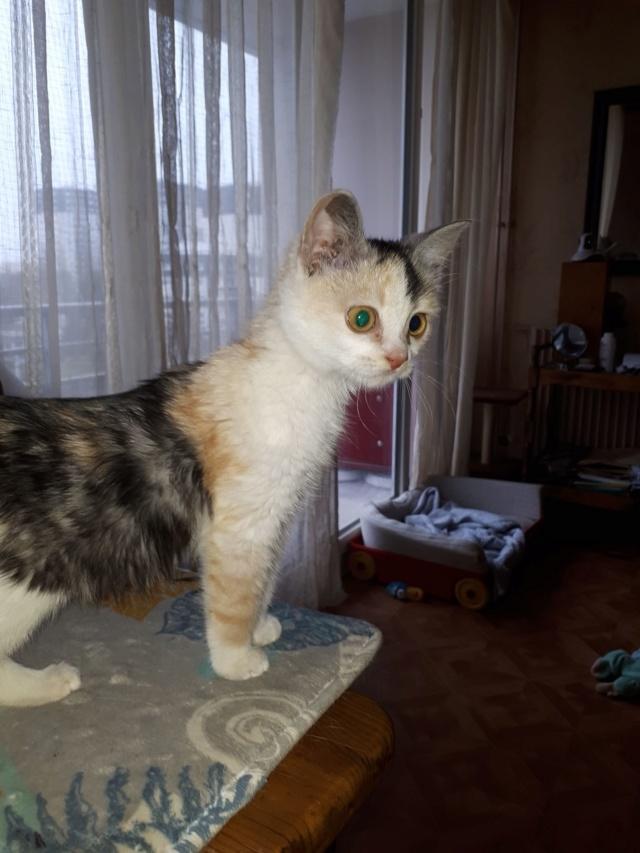 MAELYA - chaton femelle, née environ septembre 2018 - Adoptée par Véronique (78) 51632610
