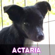 Les adultes de petite taille en Roumanie en un clin d'oeil Actari26