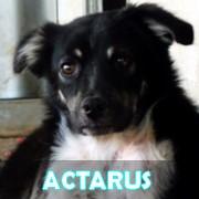 Les adultes de petite taille en Roumanie en un clin d'oeil Actaru19