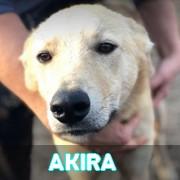 Les adultes de taille moyenne en Roumanie en un clin d'oeil Akira010