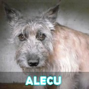 Les adultes de taille moyenne en Roumanie en un clin d'oeil Alecu13