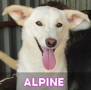 Les adultes de petite taille en Roumanie en un clin d'oeil Alpine30