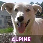 Association Remember Me France : sauver et adopter un chien roumain Alpine64