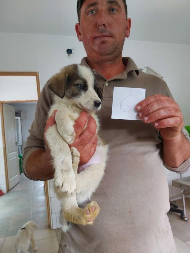 ALTAÏ - Chiot femelle - taille moyenne à l'âge adulte - Née environ mi juin 2019 - REMEMBER ME LAND - PASCANI - En FA chez CORINNE (67) Altai110