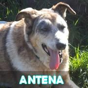 Association Remember Me France : sauver et adopter un chien roumain Antena41