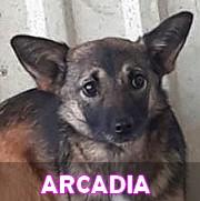 Les adultes de petite taille en Roumanie en un clin d'oeil Arcadi11