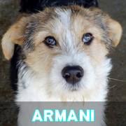 Les adultes de taille moyenne en Roumanie en un clin d'oeil Armani44