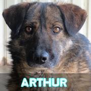 Les adultes de taille moyenne en Roumanie en un clin d'oeil Arthur52
