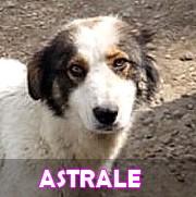 Les adultes de grande taille en Roumanie en un clin d'oeil Astral11