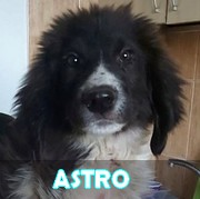 Les chiots en roumanie en un clin d'oeil  Astro11